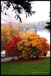 Gorgeous Fall II