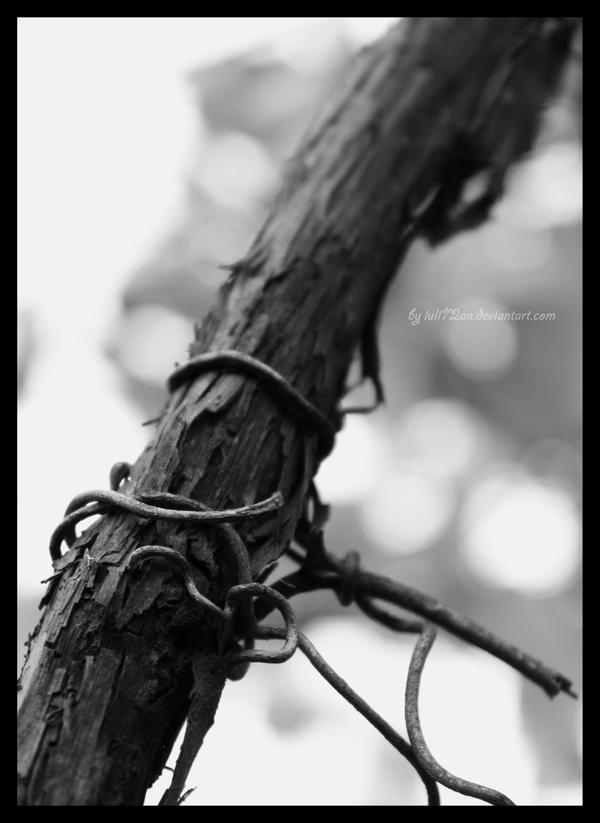 Define vine by iuli72an