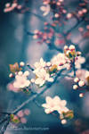 Rebirth of happiness by iuli72an