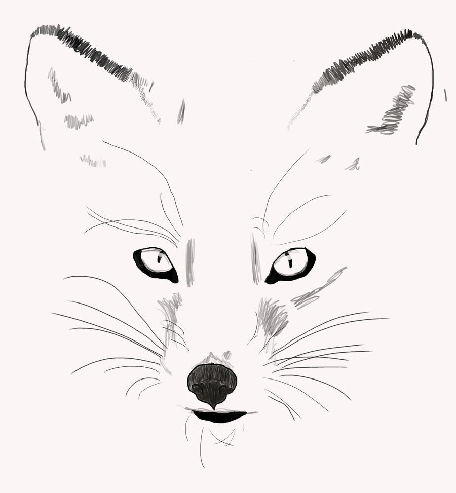 Fox Face Line Drawing : Fox outline by spottedearmc on deviantart