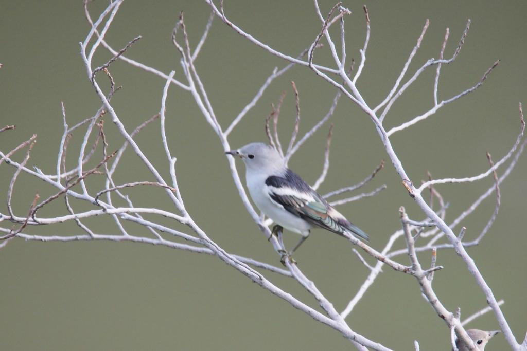 Unknown Bird WS 3 by vinsky2002