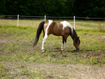 Pony by MollyMay335