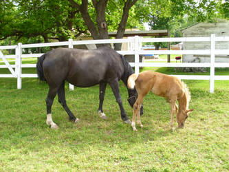 mare and foal by MollyMay335