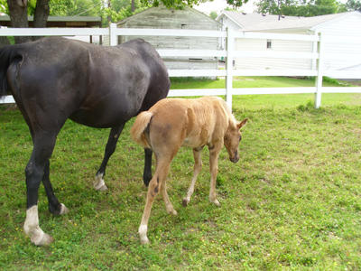 foal by MollyMay335