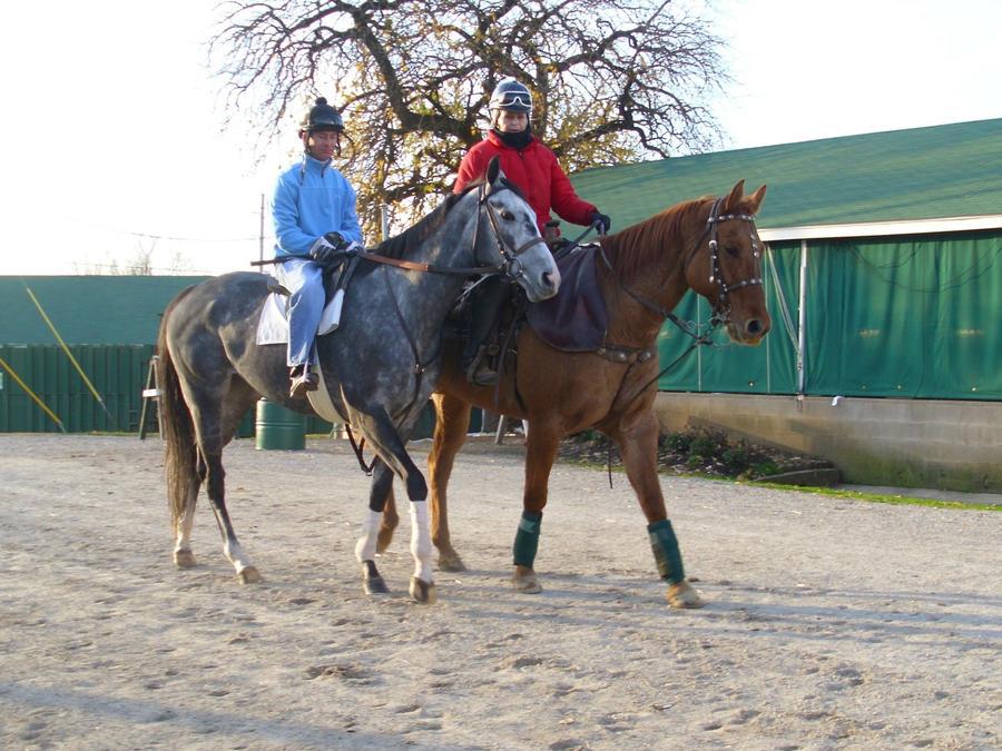 Horse and Jockey by MollyMay335