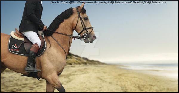 HorsePhenomena by MollyMay335