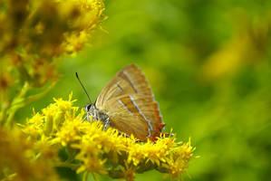 Butterfly by yanshee