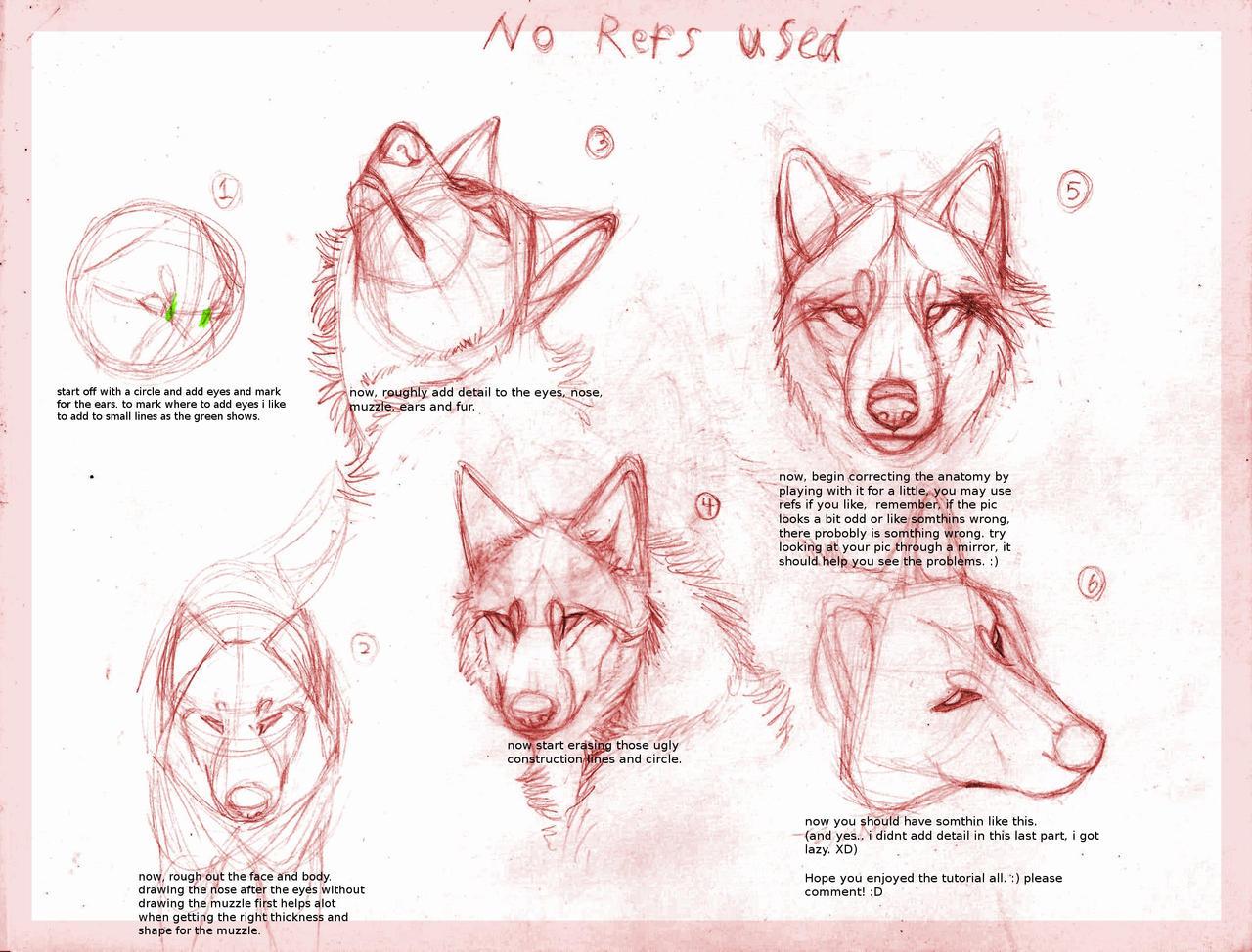 http://fc03.deviantart.net/fs70/i/2010/204/a/1/Wolf_drawing_tutorial_by_B_theawsomegeek.jpg