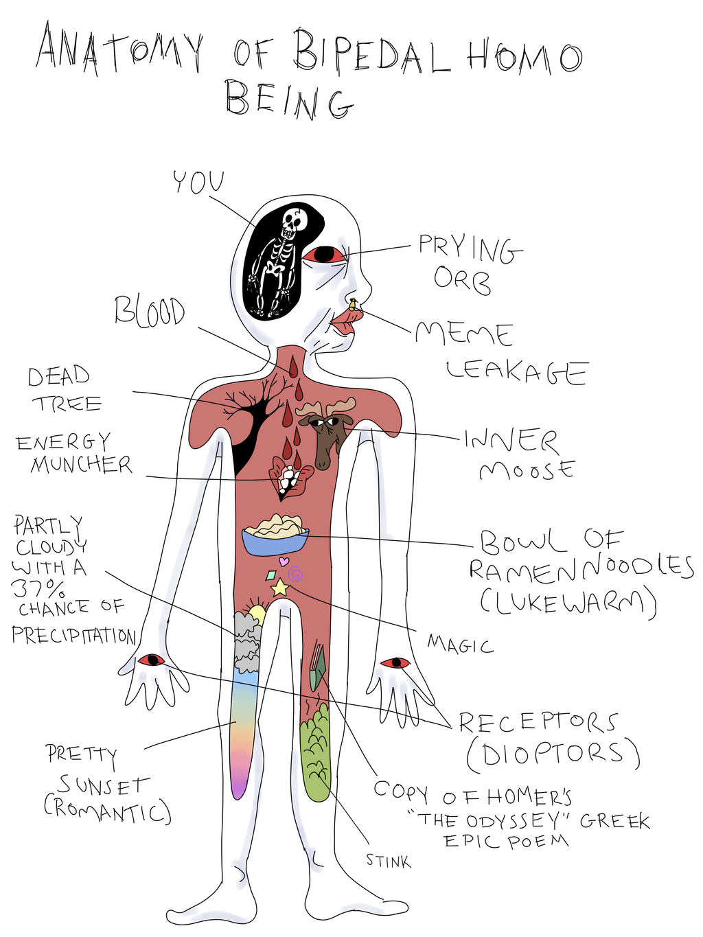 Anatomy Of Bipedal Homo Being By Grandiose Delusions On Deviantart
