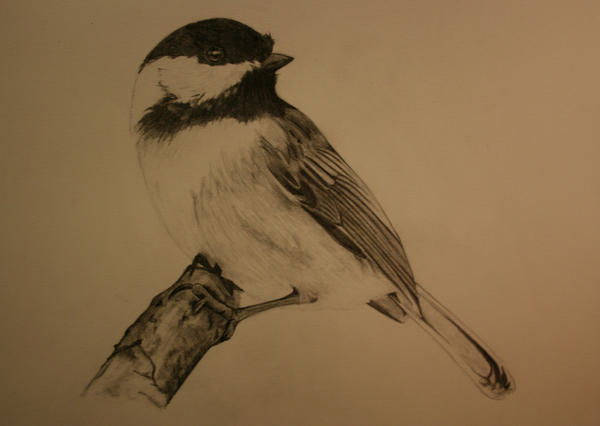 Chickadee by jacefaceinspace