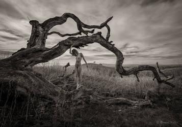 Lament for a Fallen Oak by rdhobbet
