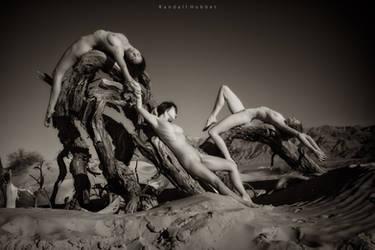 Dune Mesquite by rdhobbet