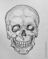 Skull Sketch 2 by love-a-lad-insane