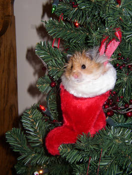 Meh hamster Micky
