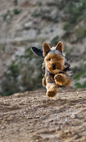 My doggy running 3 by AlieNdwa