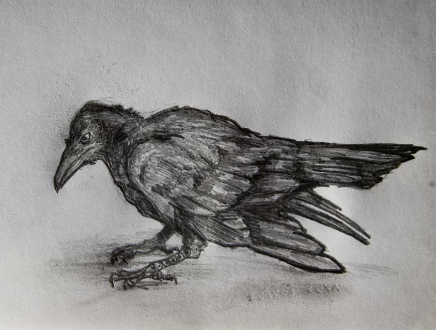 Corvus Corax by heartfullofhell