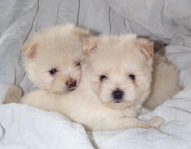 puppies by subtlesab0tage