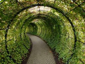 Verde/tunel