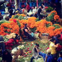 Flores de Oro / Mexico