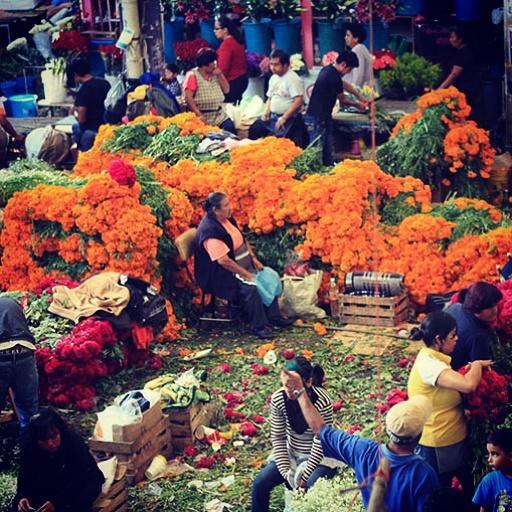 Flores de Oro / Mexico by MrcohAnt