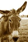 donkey by Ketike
