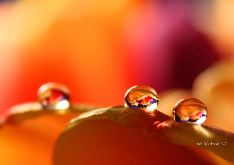 Flower Drops by nnIKOO