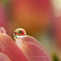 Magical Drop