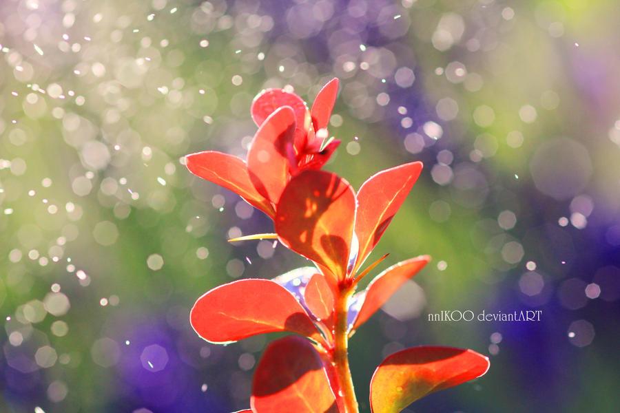 The Rain by nnIKOO