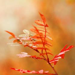 Fall by nnIKOO