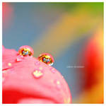 Tropical Drops by nnIKOO