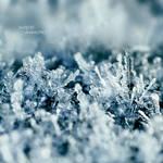 Ice Crystals by nnIKOO