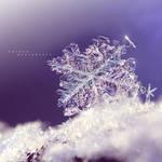 Winter Shine by nnIKOO