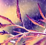 The Rainy Moment