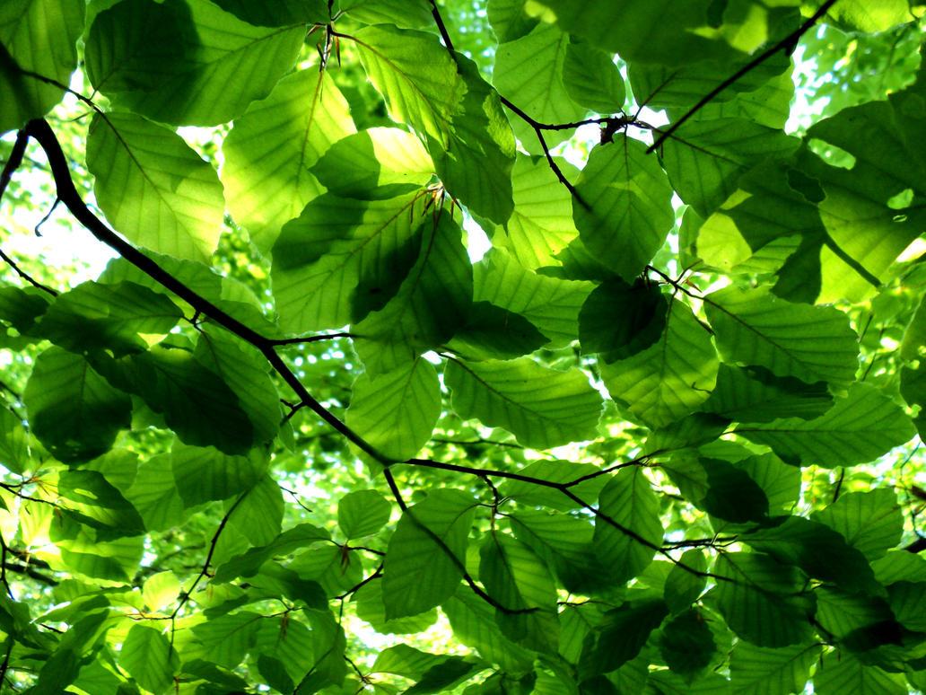 leafs net worth