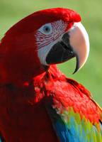 Parrot by RetroMunkey