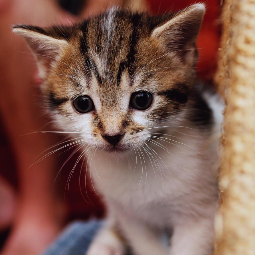 Wicker Cat Litter Box