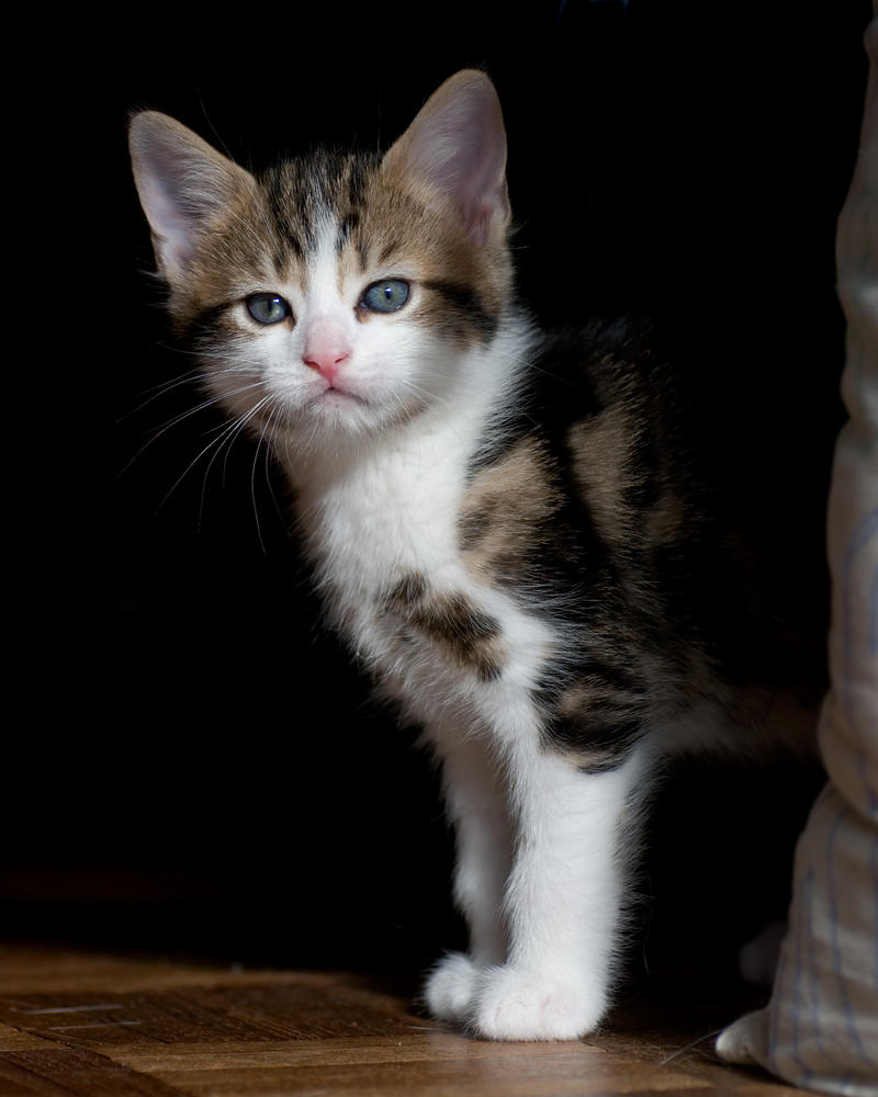 A portrait of Boris at 6 weeks by FurLined