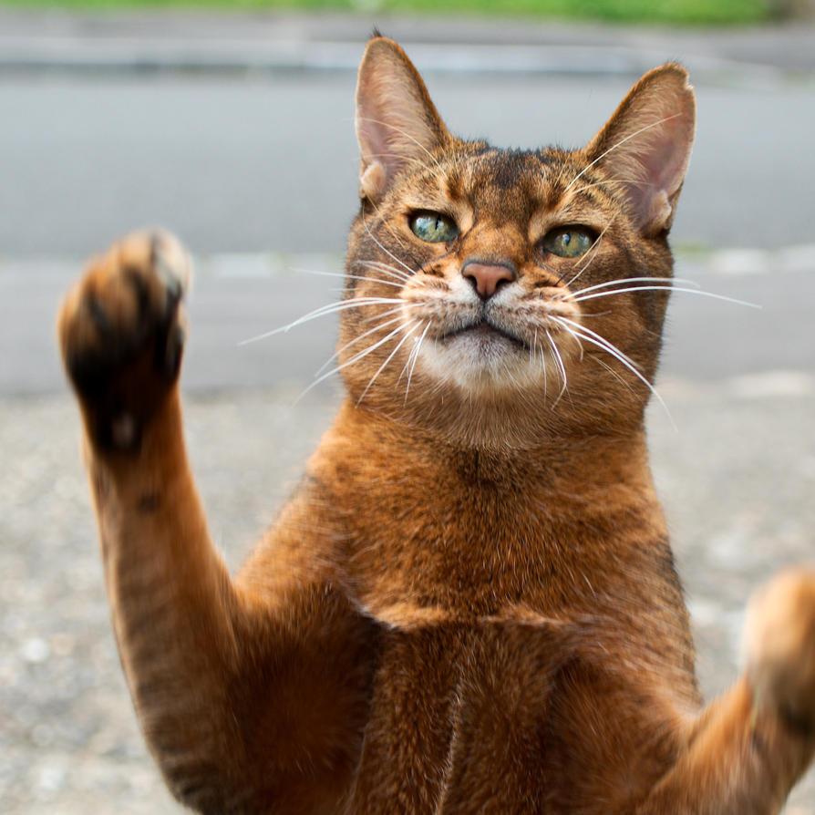 A-Cat A-Tak by FurLined