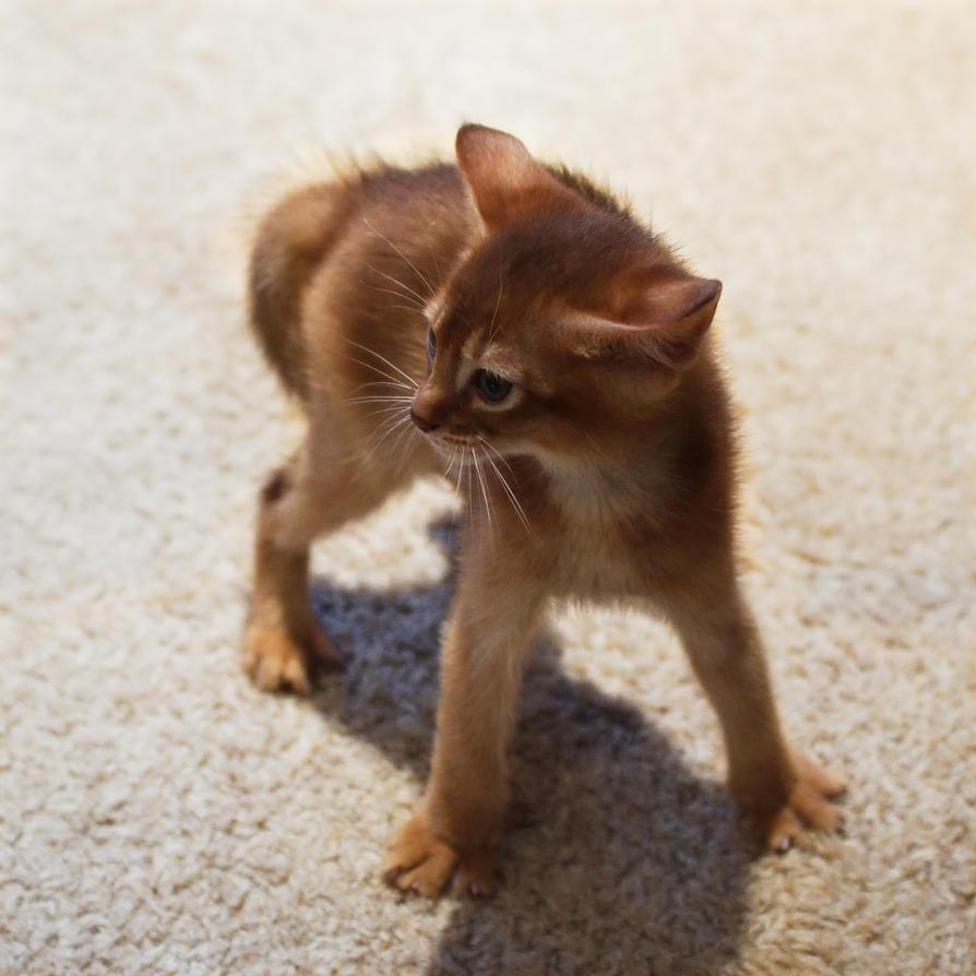 Startled Kitten Is Startled by FurLined