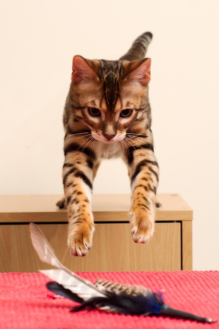 Bengal Kitten Forward Leap 1 by FurLined