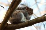 Fat Suspicious Squirrel Is...