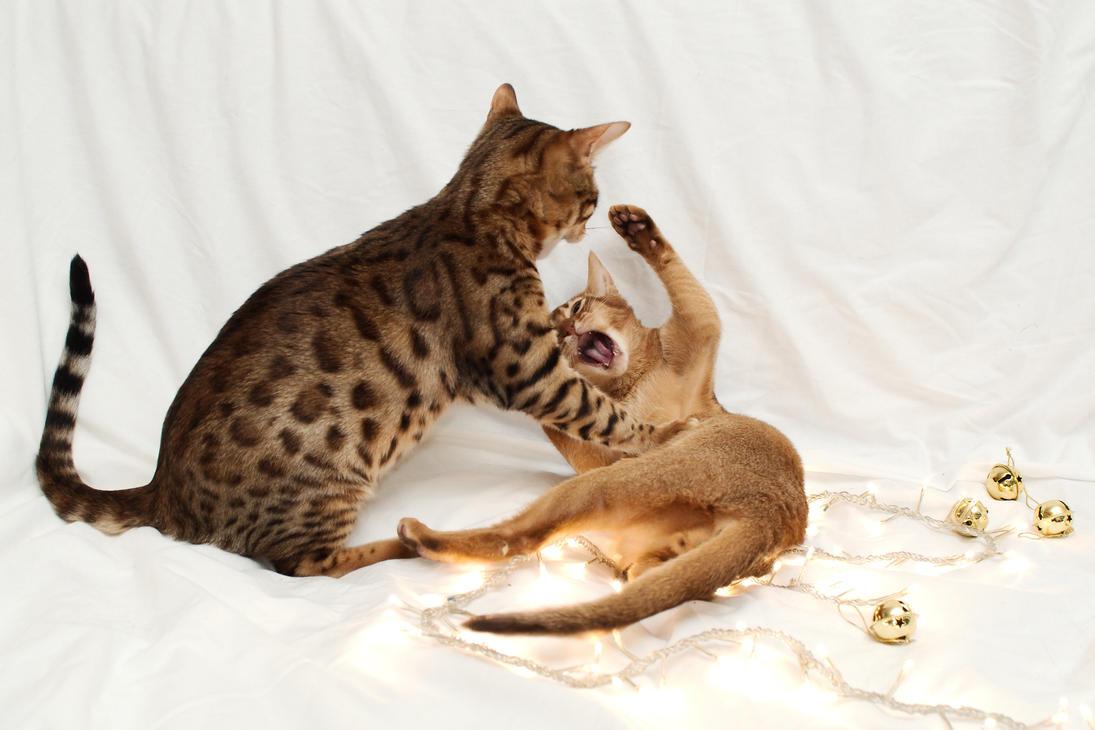 Festive Kitten Stock Outake 1 by FurLined
