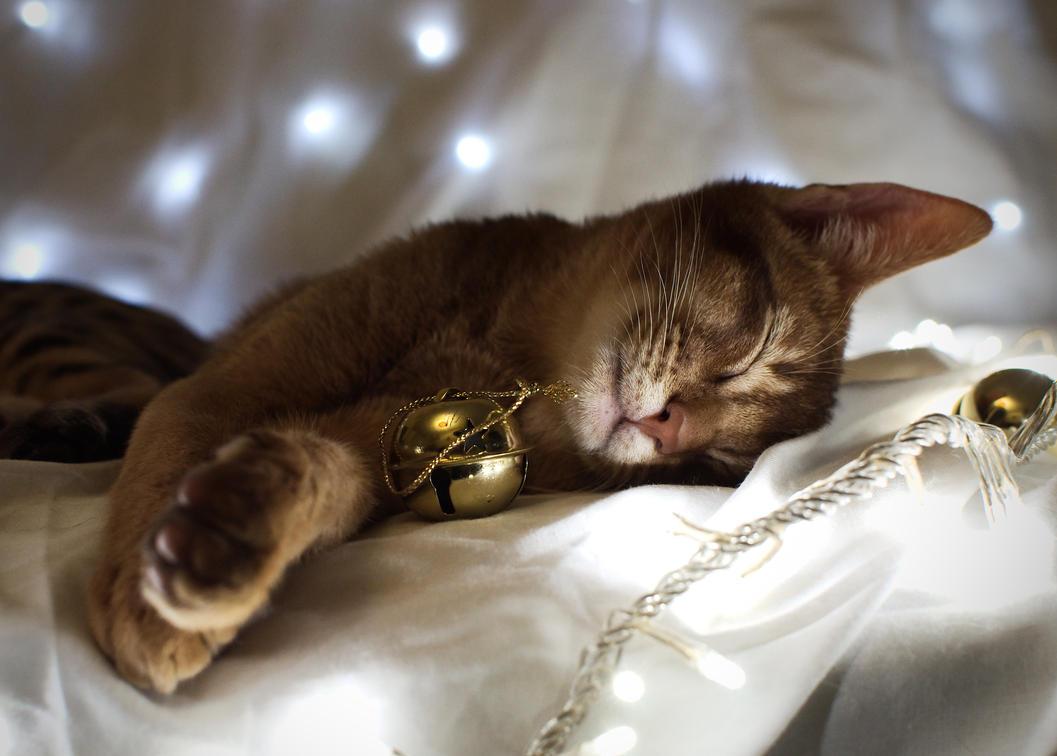 Festive Abyssinian Kitten Stock 1 by FurLined