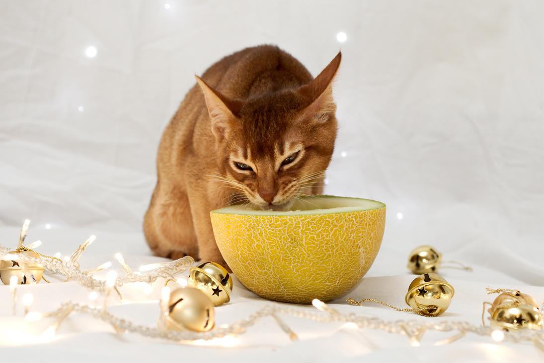 Festive Kitten Stock Outake 3 by FurLined
