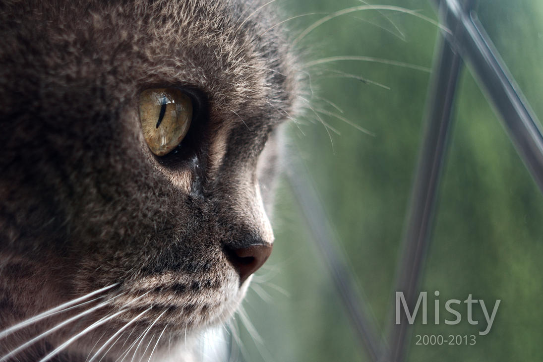 Rest in peace, Misty by FurLined