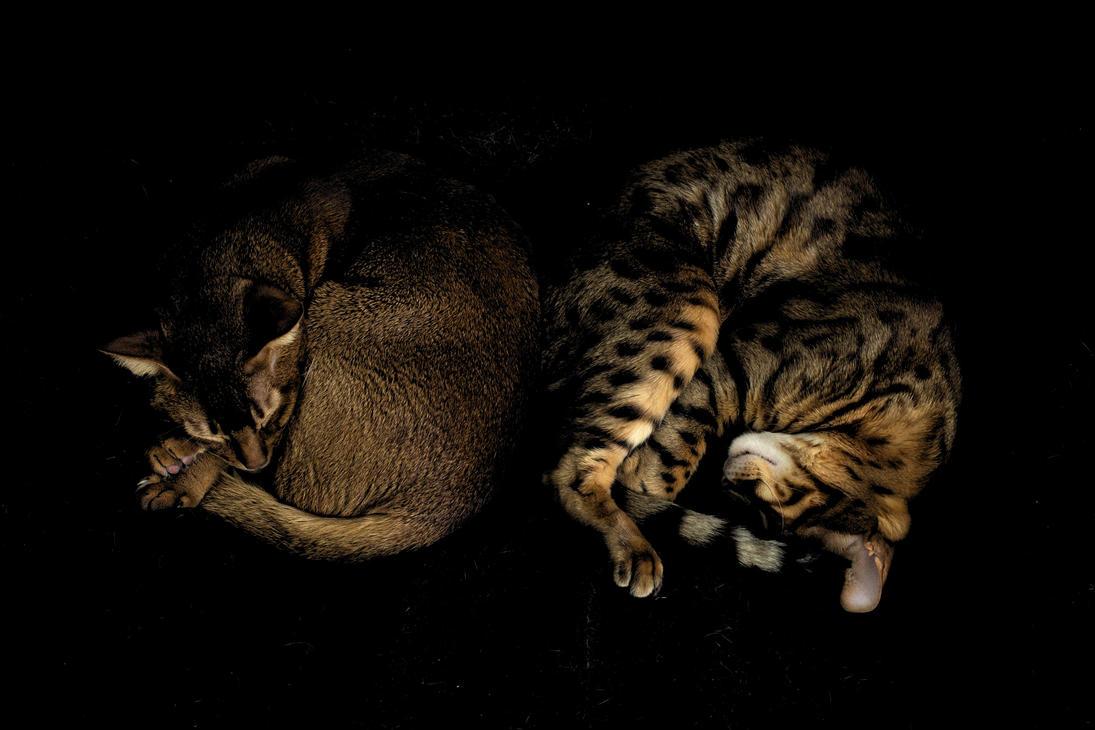 Dynamic Duo by FurLined