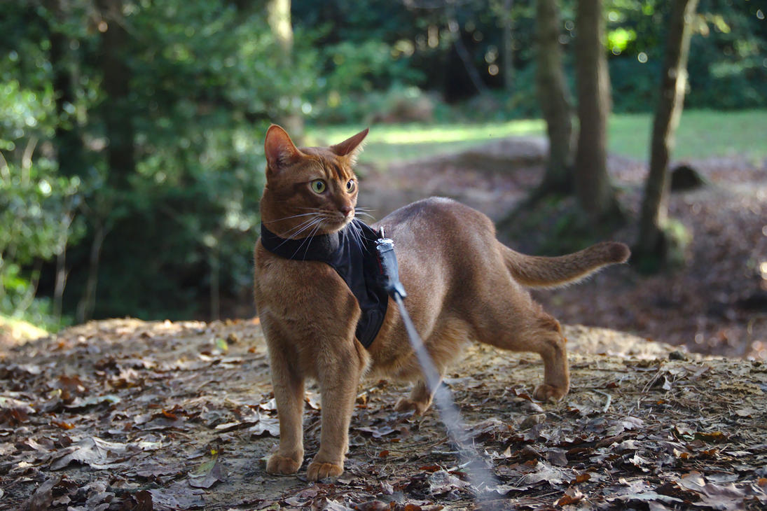 Walk in the Woods by FurLined