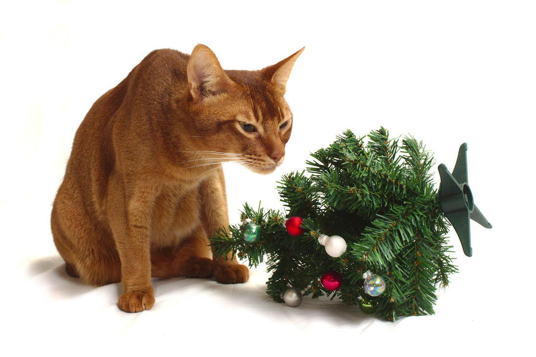 Abyssinian Cat and Mini Christmas Tree Stock 1 by FurLined