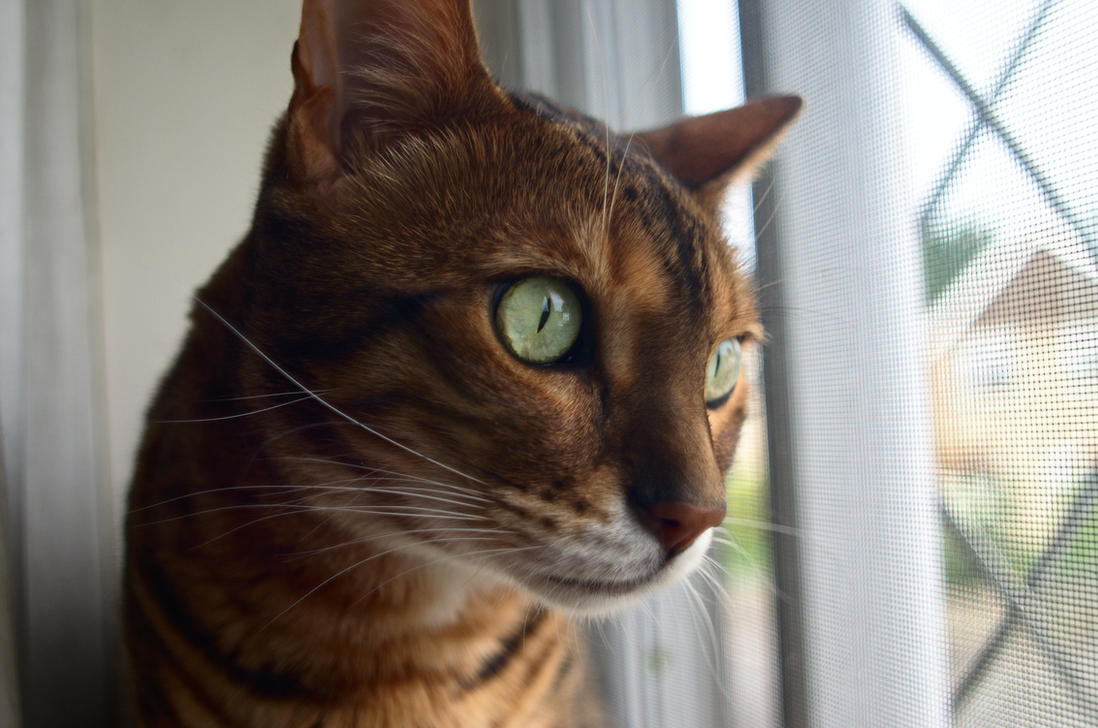 Neighbourhood Watcher by FurLined