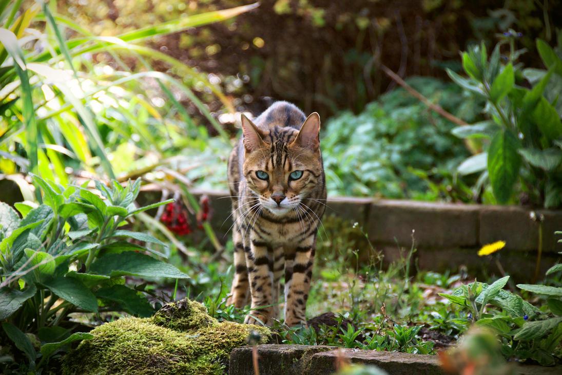 Suburban Leopard by FurLined